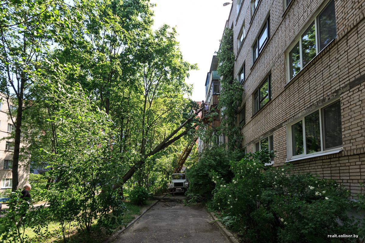 Упало дерево на дом куда звонить?