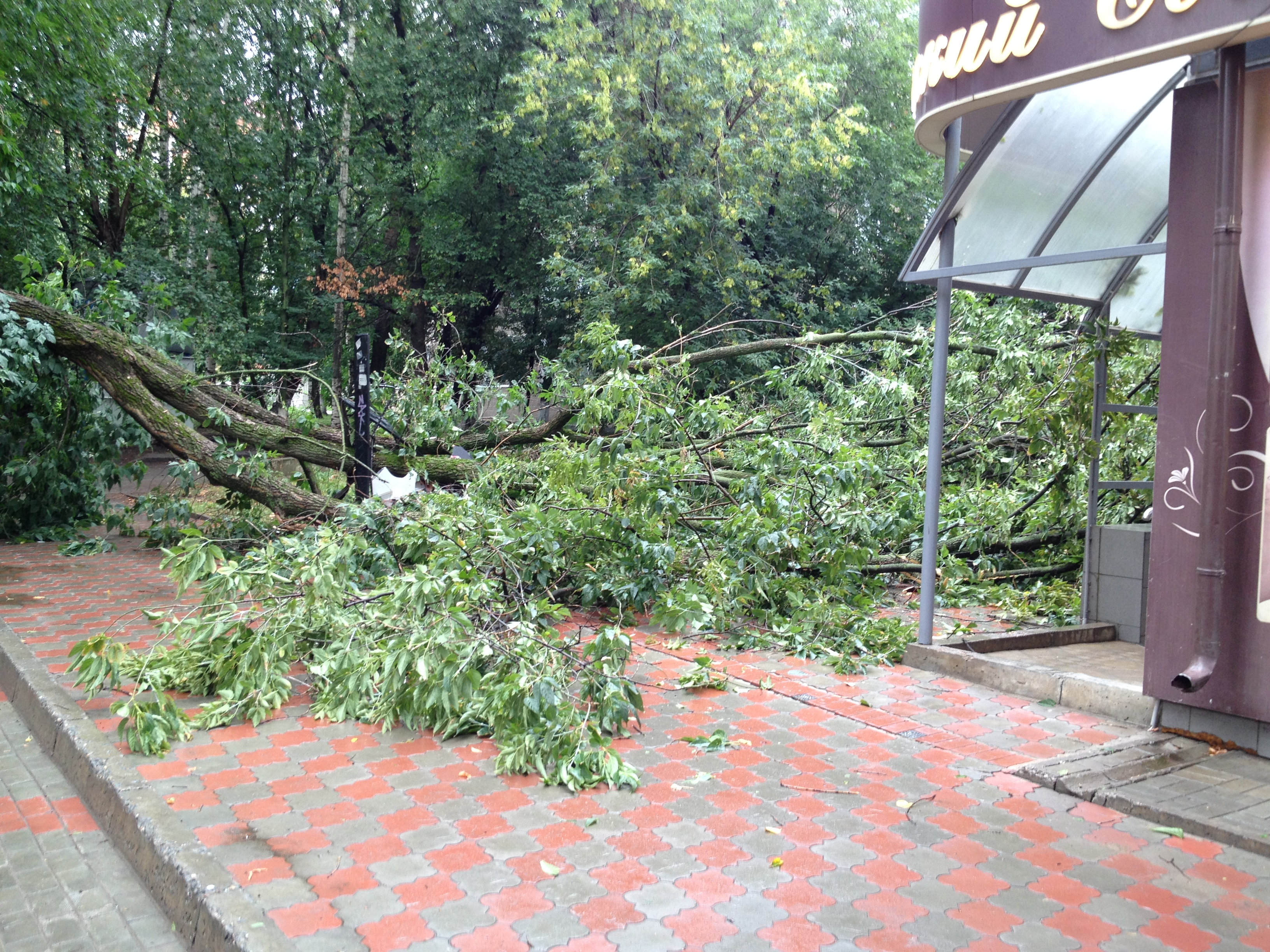 Падение дерева в Москве