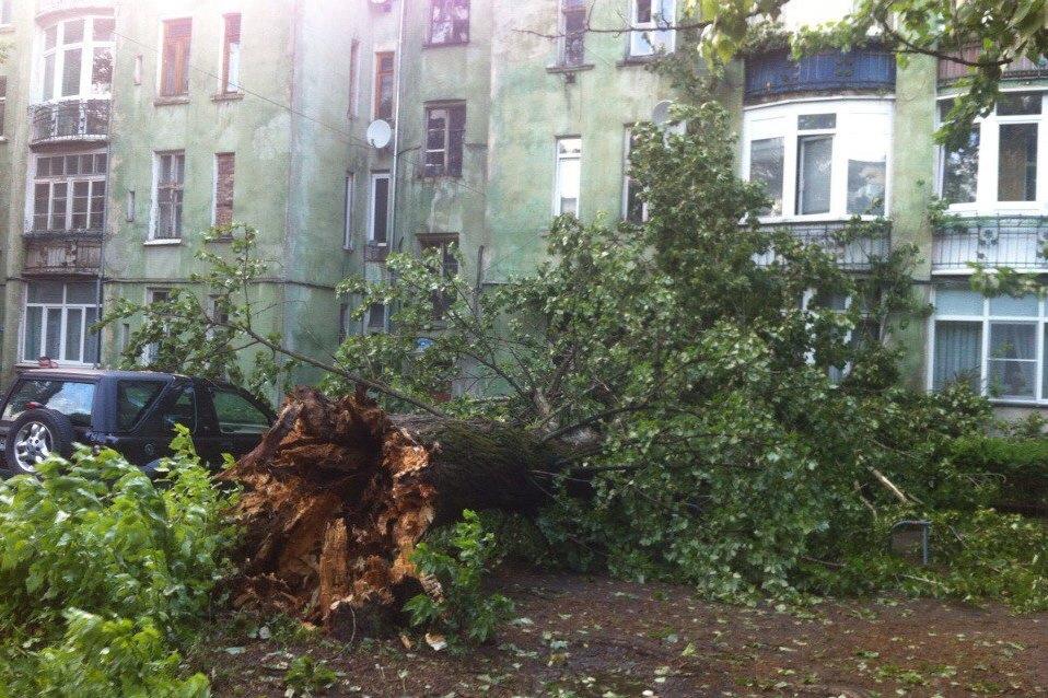 Упало дерево, куда звонить и что делать людям?