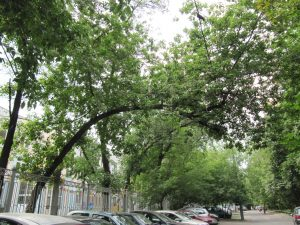 Что делать если на машину упало дерево?