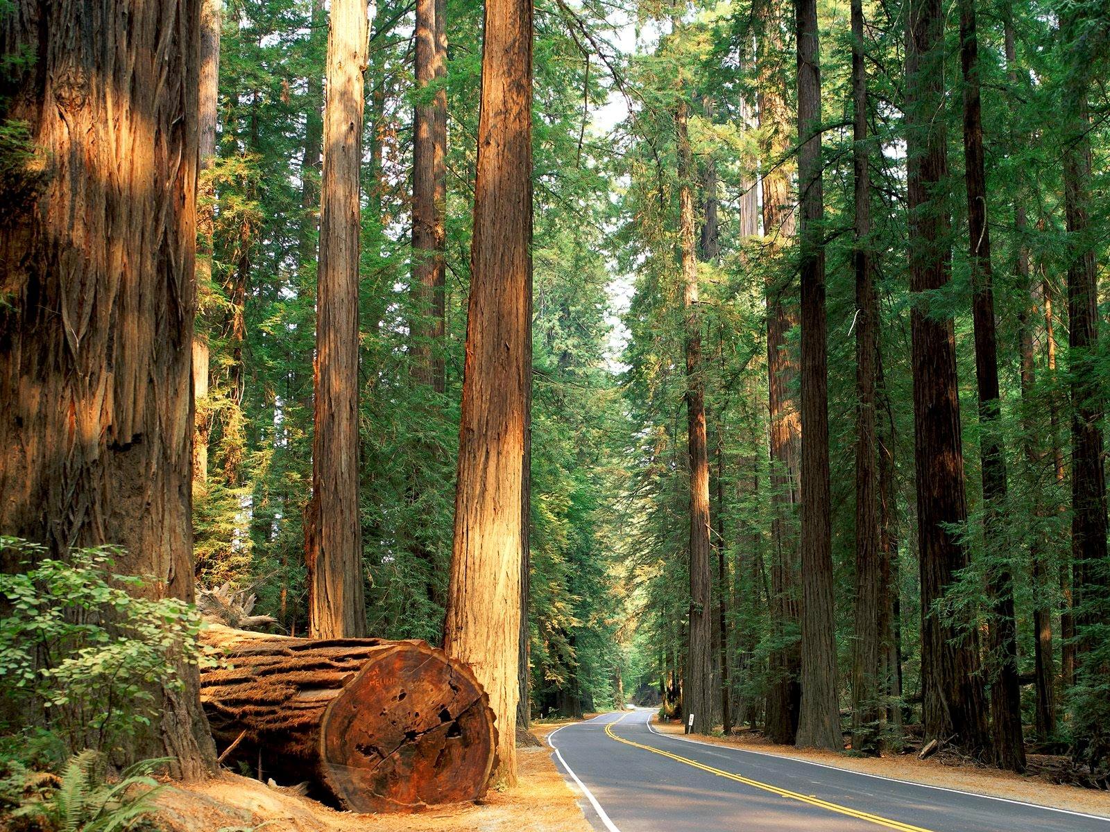 Дендрологическая экспертиза упавших деревьев