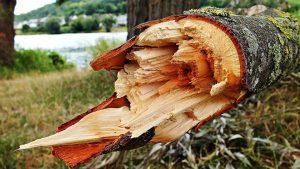 Если упало дерево на машину что делать?