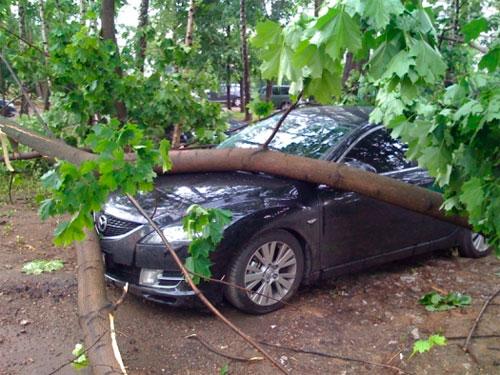 Упало дерево и повредило машину, кто ответит?