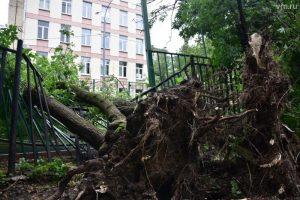 Падение деревьев от ветра, что делать пострадавшим