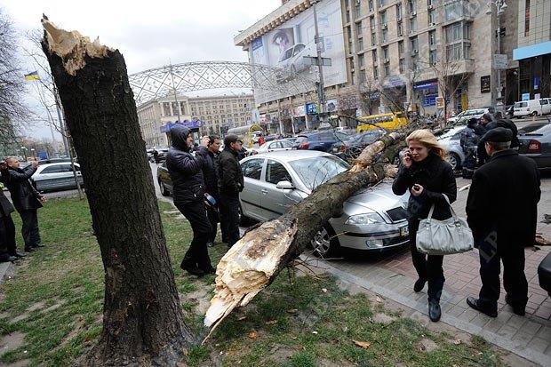 Если на машину упало дерево