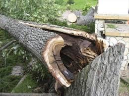 Упало дерево после урагана: кто возместит ущерб