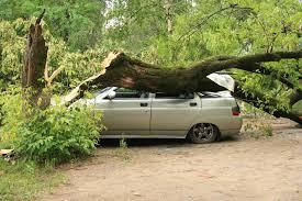 На машины упало дерево, что делать теперь?