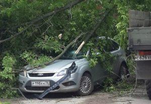 Упало дерево на машину что делать?