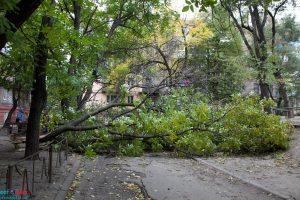 Падение деревьев в Москве: что предпринять