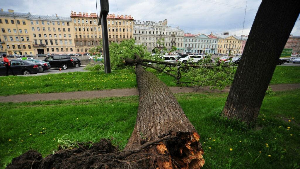 Упало дерево из-за урагана