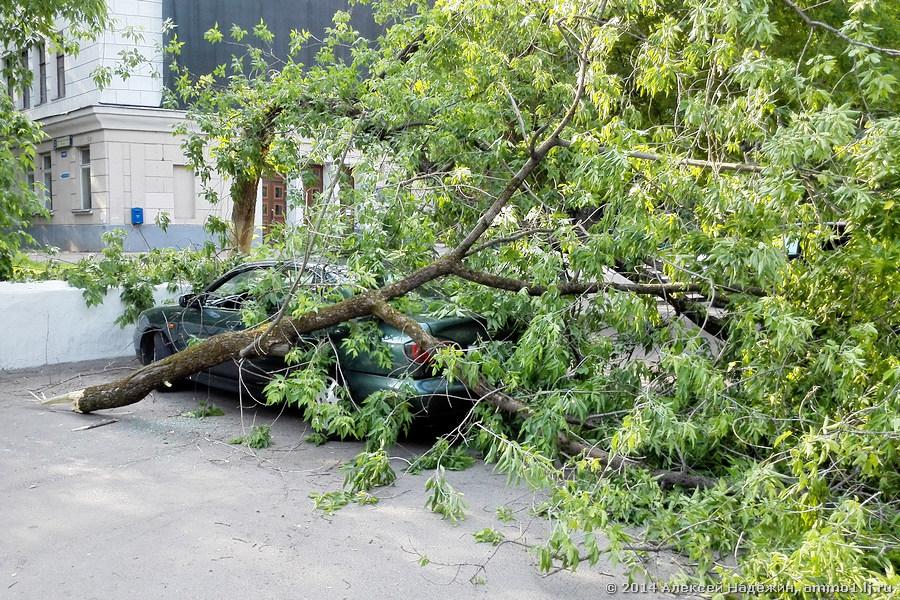 Упало дерево на машину, кто отвечает в конкретном случае