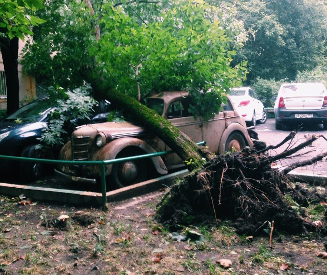 Что делать, если дерево придавило автомобиль?
