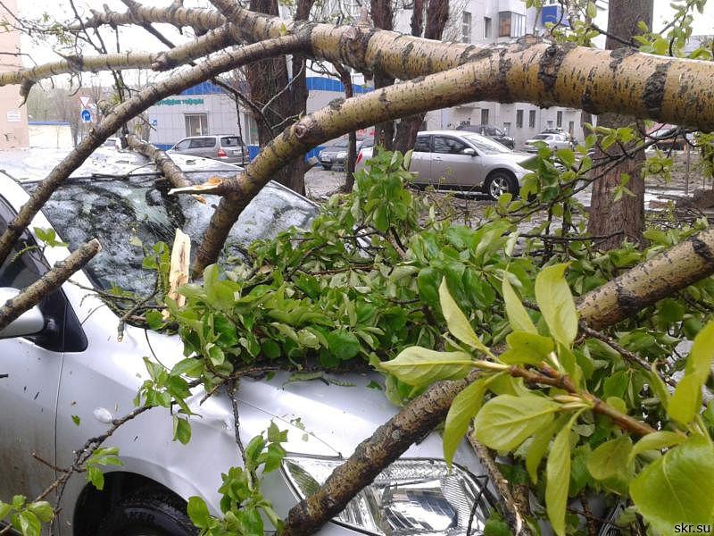 Упавшее дерево повредило автомобиль