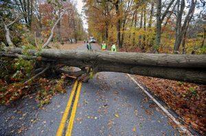 Дендрологическая экспертиза упавшего дерева