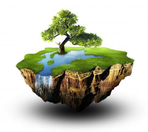 Дендрологическая экспертиза дерева в Москве недорого