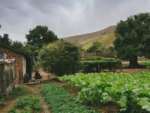 Экологическое исследование земельного участка