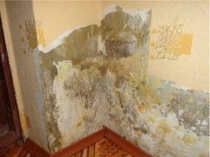 Отчего на стенах появляется плесень