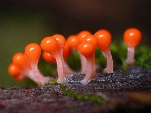 Вопросы микологической экспертизы