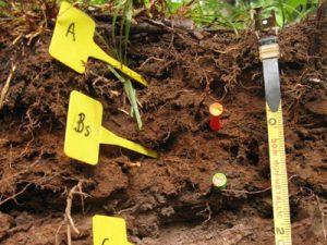 Экологическое исследование почв