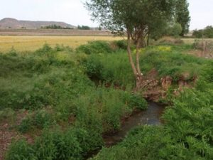Экологическое исследование территории