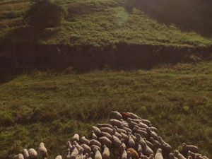 Экологическое исследование территории характеристика