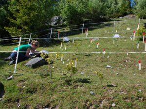 Экологическое обследование земельного участка