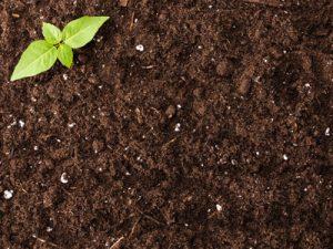 Экологическое обследование почв