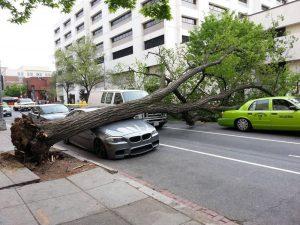На автомобиль упало дерево