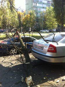 На машину упало дерево, кто виноват?