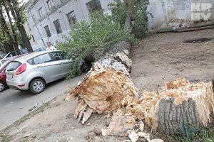 Дерево упало на дом, что делать собственнику?