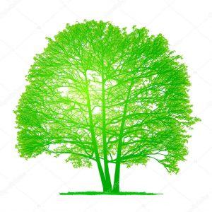 Экспертиза дерева