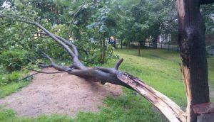 Упало дерево, куда звонить, что делать точно?