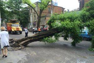 Упало дерево: куда обращаться?