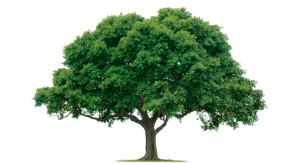 Экспертиза дерева Москва