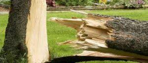 Как задокументировать повреждение имущества в результате упавшего дерева