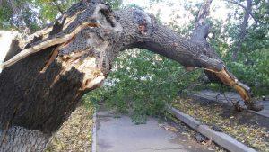На женщину упало дерево, что делать надлежит?