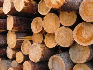 Экспертиза деревьев цена