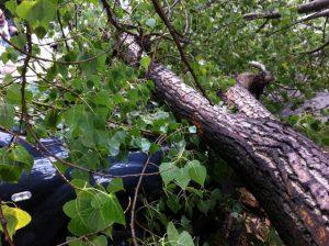 Падение дерева на автомобиль: судебная практика