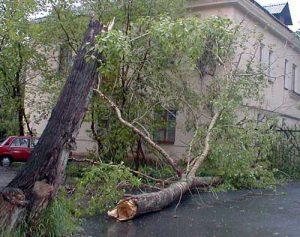 Упало дерево на человека, что делать ему и окружающим?